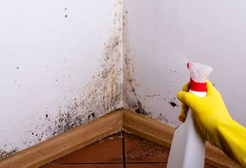 Mold Removal: Safety in Your Kitchen | Santa Clarita CA