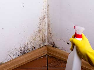Mold Removal: Safety in Your Kitchen | Santa Clarita